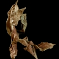 Tanz der Blätter 3