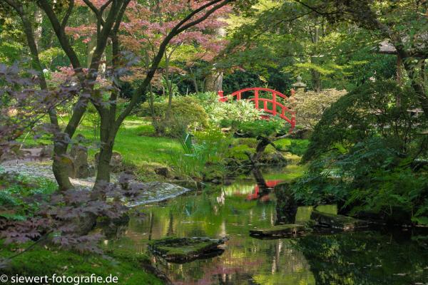 Japanischer Garten Den Haag