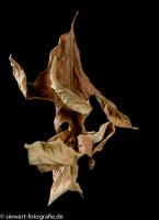 Tanz der Blätter 4