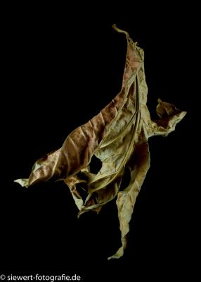 Tanz der Blätter 2